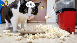 Shooting Popcorn. Cat's Reaction