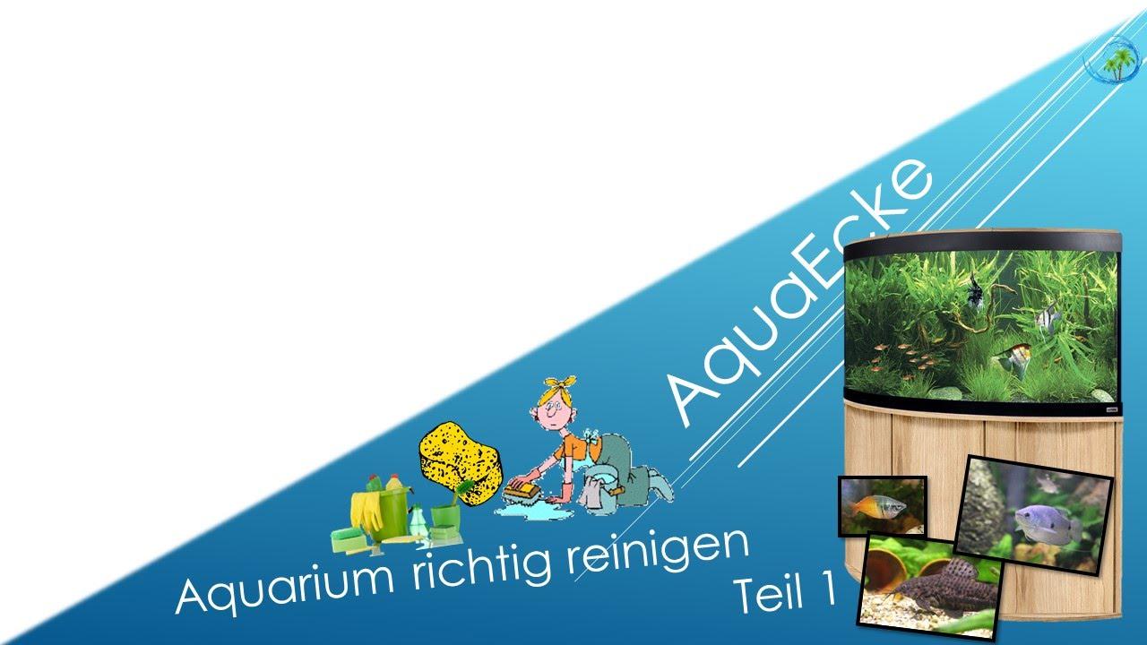 Aquarium richtig reinigen teil 1 4 aquaecke youtube for Aquarium reinigen