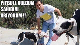 PİTBULL BULDUM SAHİBİNİ ARIYORUM ( Sokak Köpeklerini Beslerken, Pitbull Buldum ) Best Dog
