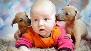 Дети и животные 2  Приколы с животными осень 2014  Dogs, Cats Cute Babies Compilation  Part 2