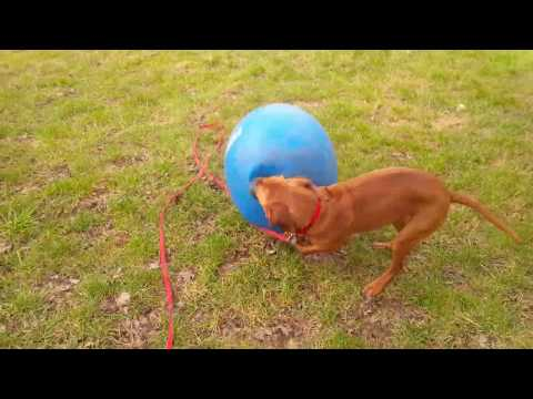 Fern and her circus ball act