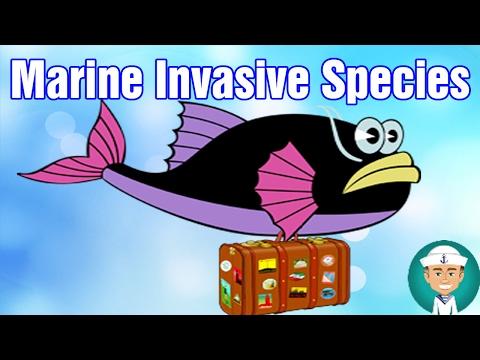 What is an Invasive Species? Environmental Threat From Marine Invasive Species