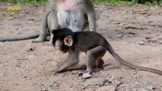 Ah so strange why Kissy baby trying to move around   Cute acting small monkeys Allie & Kissy