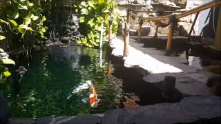 Crystal Clear Water Koi Pond