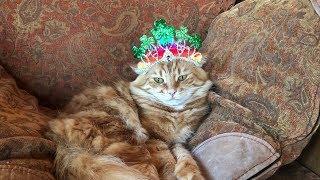 Funny Cat Attacks his St Patrick