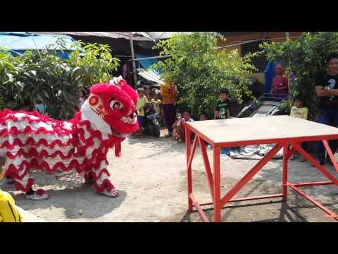 Barongsai singa mas tampil di bekasi