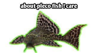 pleco fish care crocodile fish