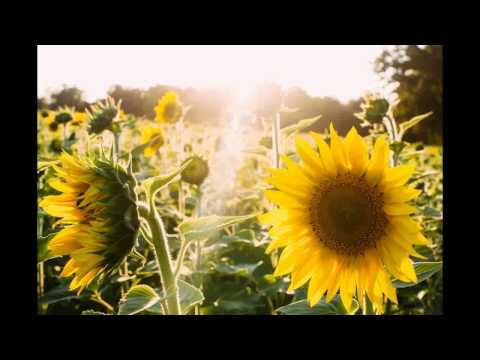 Nature & Song - Sundo (Filipino)