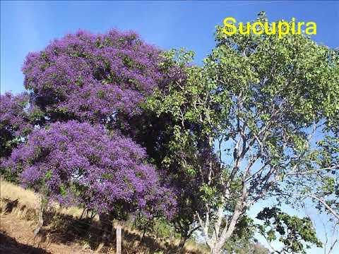 Comunidade Bom Jesus   Mapeamento das Populações Tradicionais do Cerrado   2004