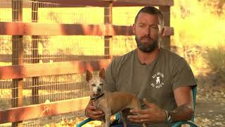 Dog rescue ranch