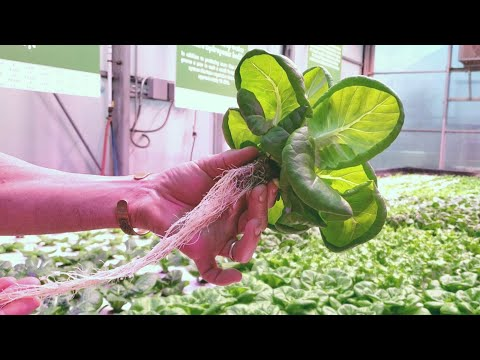 AMAZING Hydroponic Farm Donates 100% Of Its Food