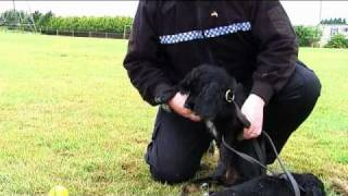 South Wales Police Dog Section 50th Anniversary - Puppies