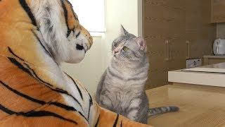 고양이들이 호랑이를 만나면 생기는 일