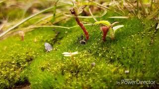 Semut semut kecil 🐜