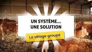 Un système...une solution - Vêlages groupés