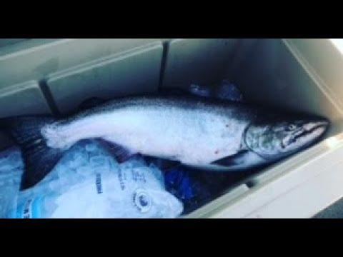 Ludington Lake Michigan Salmon Fishing 7/14/18