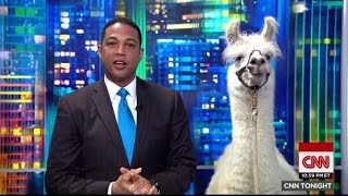 Why Does The Media Care So Much About Llamas?