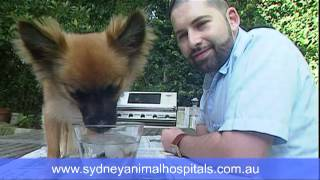 Sydney Animal Hospitals - Our Approach To Dog Separation Anxiety