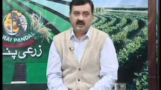 Training Courses by Solve Agri Dairy Institute™, Lahore, Pakistan - Royal News Part I