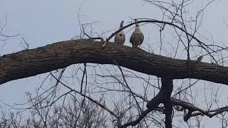 Утки и гуси, кому весна, а кому зимовка! Аnimals,Tiere
