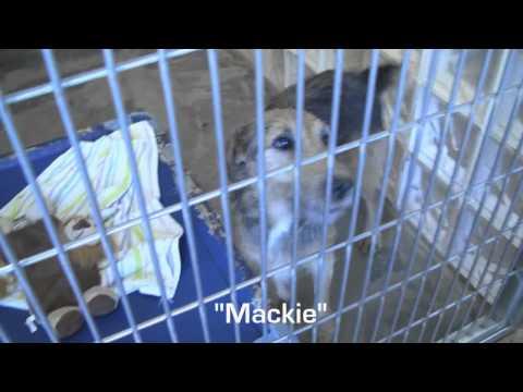 Kauai Humane Society Lihue, Hawaii ASPCA: Meet a Few Dogs For Adoption