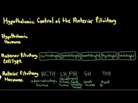 Schneid Guide to Hypothalamic Control of the Anterior Pituitary (Video 2 of 3)