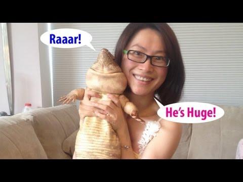 ☜ Want a pet Tegu Lizard?  Watch this first!