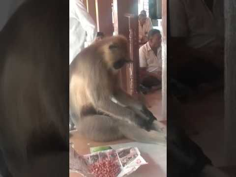 Monkey Praying To God - Akkalkot Swami Temple...!!!