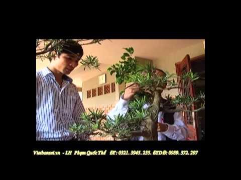 Vietbonsai.vn: Kỹ thuật trồng tạo hình cơ bản- P5