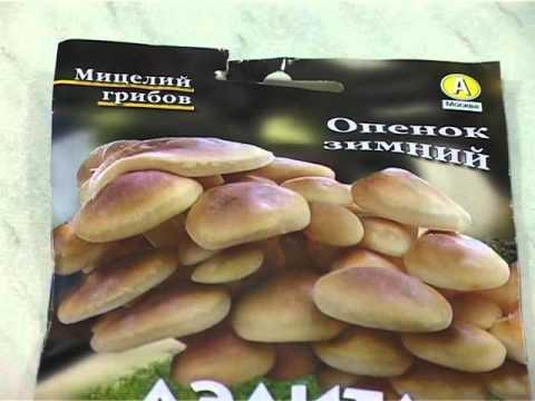 Валерий Панов: Как вырастить грибы на своём участке?