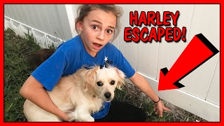 Our puppy, Harley, found a way out of our backyard and escaped the ...