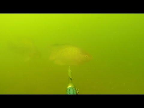 ดำน้ำยิงปลา ปลานิลบ่อทราย
