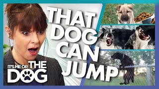 The Incredible Canine Acrobat and More | Victoria Stilwell Reacts to YOUR Dogs | It's Me or The Dog