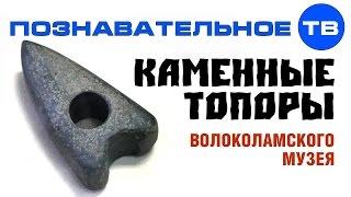 Каменные топоры Волоколамского музея (Познавательное ТВ, Артём Войтенков)