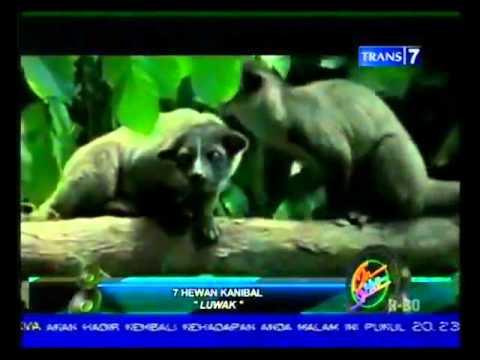 7 hewan kanibal
