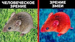 Как Животные Видят Наш Мир