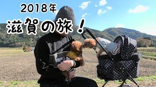 滋賀旅行!愛犬とフレンチディナーを楽しむ♪初ドッグラン!! トイプードルのTaruto&Rasuku thumbnail