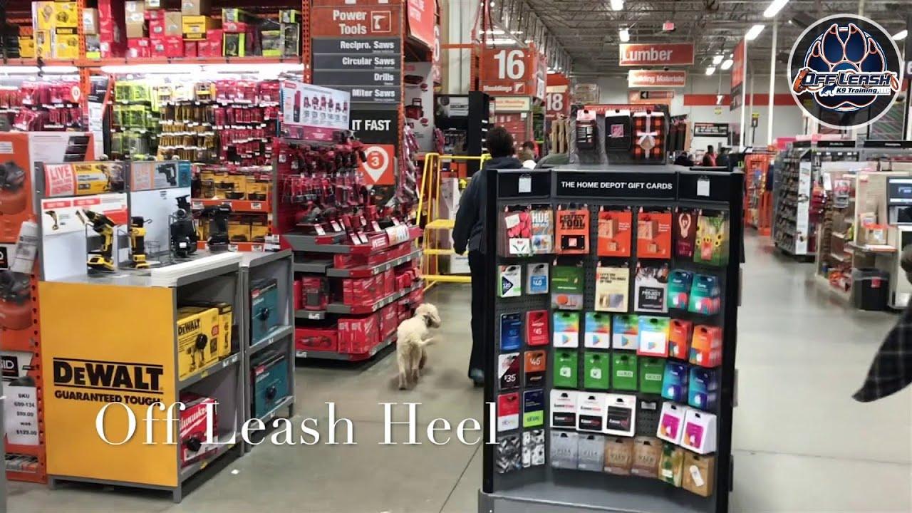 2 Year Old Cavapoo, Cooper | Cavapoo Dog Trainers | Off Leash Cavapoo