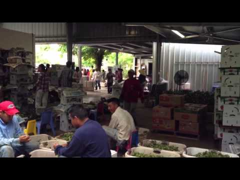 Vietnamese  Logan farm Homestead Fl