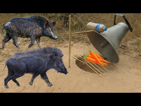 Easy Big Speaker Created Deep Hole Wild Pig Trap by Man - How To Catches a Wild Pig With Traps