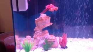 My new gold fish tank :) Thumbnail