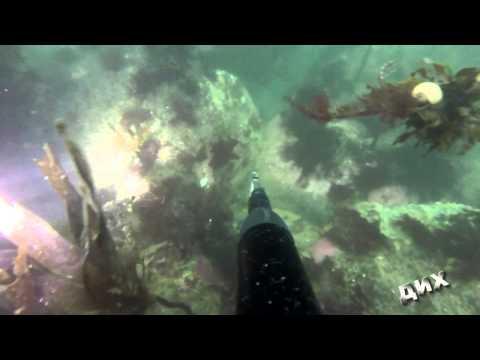 Подводная охота на крабов