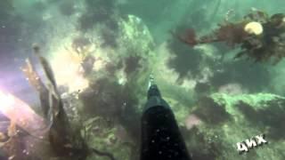 Подводная охота на крабов(Подводная охота на крабов в Охотском море г.Магадан., 2015-09-22T03:11:28.000Z)