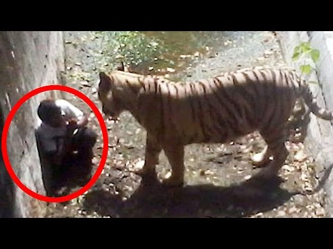 5-most-shocking-animal-attacks-caught-on-tape