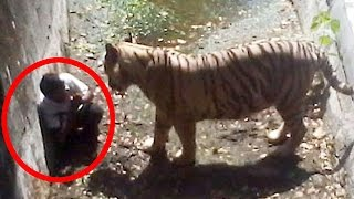 5 Most Shocking Animal Attacks Caught on Tape