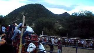 Consentido De Rancho Viejo vs Negro Durazno