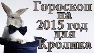 Гороскоп для Кролика на 2015 год