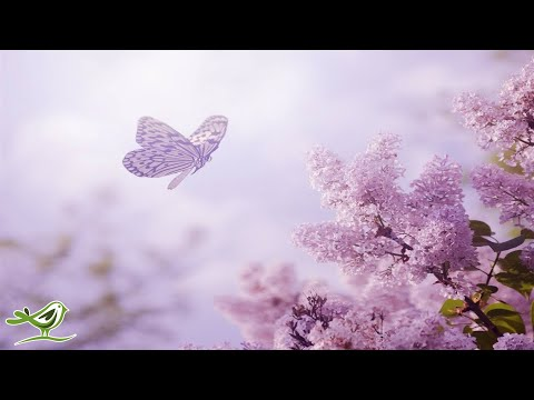 Relaxing Piano Music: Romantic Music, Beautiful Music, Sooth