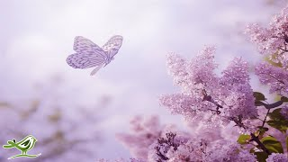 Download Relaxing Piano Music - Romantic Music, Beautiful Music, Soothing Sleep Music, Relaxing Music ★89