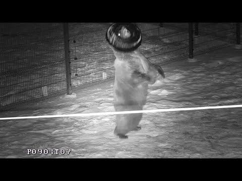 Видео: По традиции вечерняя тренировка с покрышкой